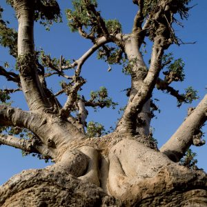 Baobab Groupe Emile Biopartenaire