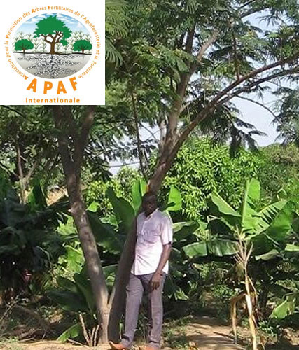 APAF Groupe Emile